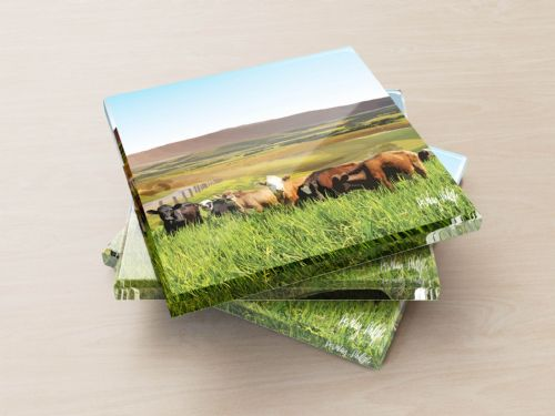 Rolling Hills With Cows Blue - Glass Coasters